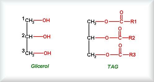 glicerol TAG
